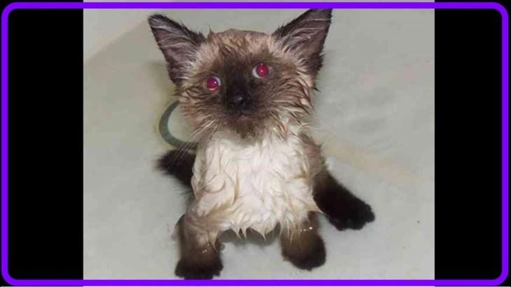 【感動】高速道路で保護した子猫は2つの重い障害を負い、獣医は安楽死を勧めたが…【世界が感動!涙と感動エピソード】