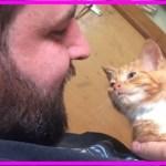【感動】保護した子猫は他の猫に比べて成長が遅い…大きくなれない猫は、常に愛情を感じていたい猫だった…【世界が感動!涙と感動エピソード】