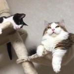 脱力感いっぱいの前足の猫がかわいい  Kitten is feeling drained out