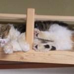 橋の上でおもしろい姿で眠っているボス猫