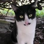 感動猫動画、アウェイの洗礼ネコパンチを受ける