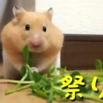 【ハムスター】ハムケツ祭り!踏ん張るお尻がやばい!おもしろ可愛い癒しHamster 's stepping tail are too cute!