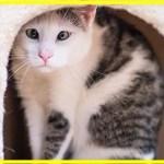 【感動】野良猫のグループから追い出され、独りぼっちで彷徨っていた猫。保護され心を開くと、周りを幸せにする人気者に!【世界が感動!涙と感動エピソード】