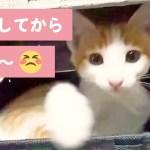 「開けちゃダメダメ〜😾 」 ニャンコが飛び出すびっくり箱😄!?【PECO TV】