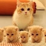 「猫かわいい」 すごくかわいい子猫 – 最も面白い猫の映画 #247