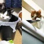 猫ちゃんによるイタズラ(悪戯)の犯行現場がじわじわ面白いw~The crime scene by a cat is funny.