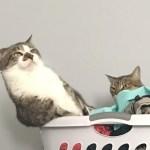 猫ちゃんは凄いってなる決定的瞬間がじわじわ面白いw~Crucial decisive moments are amusing.