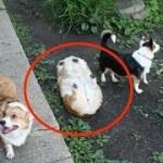 「絶対笑う」最高におもしろ犬,猫,動物のハプニング, 失敗画像集 #21