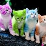 「猫かわいい」 すごくかわいい子猫 – 最も面白い猫の映画 #256