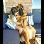 「おもしろ犬」かわいいシェパード犬の超おもしろいハプニング、動画集
