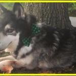【感動】末期ガンの愛犬…残りの犬生を美しく生き、飼い主に抱きしめられながら永遠の眠りにつく…【世界が感動!涙と感動エピソード】