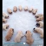 「面白い動物」あり得ないことをする犬, 猫・おもしろ犬, 猫のハプニング, 失敗集 #7