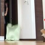 【ハムスター】飼い主が消えるドッキリにまさかの…?おもしろ可愛い癒しHamster Confused by Disappearing Owner in What the Fluff Challenge