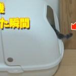 掃除機をかけた瞬間の猫の反応が面白い!w【すずとコテツ】