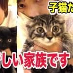 知ってください!ペットショップに行かなくても可愛い子猫たちが新しい家族を待っています/ 米村でんじろう[公式]/science experiments