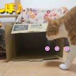かくれんぼする猫が可愛い♪【すずとコテツ】