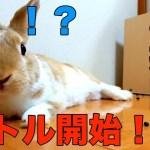 【おもしろハプニング】大パニック!?うさぎと飼い主の掃除バトル開始 funny rabbit Video