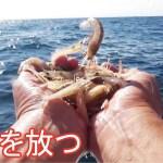 生きたエビを針にさして釣りをしたら凄い・・・