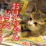かわいい子猫が突然お家にやってきた-その時、先住猫達は・・・?!5週間目3-kitten came to our house 33