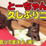チビ助たちの可愛いおチビちゃん時代の動画を大放出!