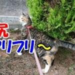 猫のかわいいお尻フリフリだけを集めた動画-かわいい猫なのに犬として育てられた猫50