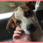 【感動】それでもまた人を信じ愛情を示す!酷い虐待を受けていた犬に胸を痛めた女性は、すぐにその犬を保護!直後、犬が見せた行動に涙…【世界が感動!涙と感動エピソード】