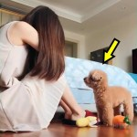 ♥面白いことをしているかわいい犬と猫P17♥面白い動画2018