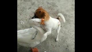 「面白い動物」あり得ないことをする犬, 猫・おもしろ犬, 猫のハプニング, 失敗集 #28