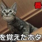 【番外編】ダメだと言われる事ほど面白い!猫ホタル
