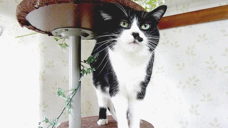 秋の虫もビックリ~猫のかそけき鳴き声 Teeny cricket like cat's meow