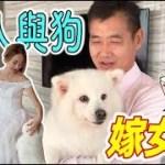 老人與狗嫁女兒!😭😭😭『感動千萬人』