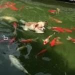 「面白い動物」あり得ないことをする犬, 猫・おもしろ犬, 猫のハプニング, 失敗集 #9