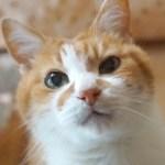 おもしろ可愛い猫と犬の動画集2