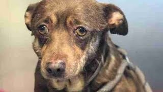【感動実話】歳を取りすぎたという理由で捨てられた犬