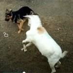 「面白い動物」あり得ないことをする犬, 猫・おもしろ犬, 猫のハプニング, 失敗集 #10