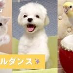 アニマルダンスパーティがはじまるよ🎶😚 ダンスを楽しむ可愛い動物達🐶🐱🐦 【PECO TV】