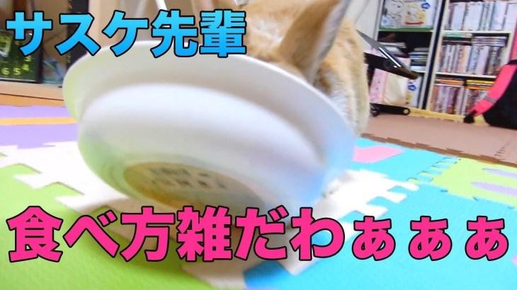 【おもしろハプニング】うさぎの食事風景で珍プレー!?