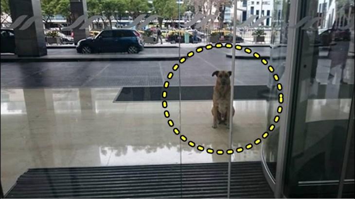 【感動】ある女性に恋した野良犬。会えるかどうかわからない女性を待ち続けた犬に、ついに奇跡の瞬間が!【世界が感動!涙と感動エピソード】