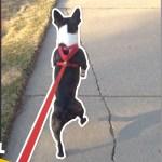 【面白い動画】  かわいい犬 – 世界の面白いペットの動画 #17【Video Pizza】