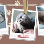 カワウソ コタロー かわいい赤ちゃん時代から現在までの指しゃぶり Kotaro the Otter Sweetest Sucking Finger Memories