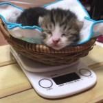 カメラ方向にアゴ乗せする子猫がかわいい