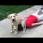 「絶対笑う」最高におもしろ犬,猫,動物のハプニング, 失敗画像集 #403