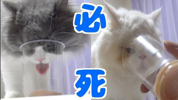 猫に透明の紙コップを与えると面白い表情が撮影できた!w
