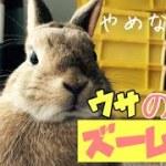 ウサギの可愛いドアップ求めて走り回るぞ!#285