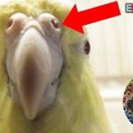 鳥の生態(呼吸)に感動したマニアックな動画524 Birds are breathing in their nose.