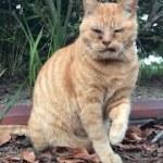 寂しがりやな長老茶トラ。可愛い猫動画
