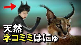 羽生結弦のスゴイ瞬間!天然ネコミミ!!天女になったり魔王になったり…いくつ顔を持っているの?#hanyuyuzuru#figureskating