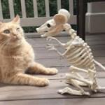 「面白い動物」あり得ないことをする犬, 猫・おもしろ犬, 猫のハプニング, 失敗集 #138