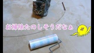 掃除の邪魔をする子猫のビビが可愛い Kittens to disturb you are cute
