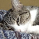 見られてびっくりの猫